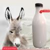شیر خر، فروش شیر خر